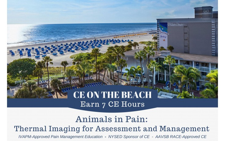 CE on the Beach - Animals in Pain: Thermal Imaging for Assessment and Management