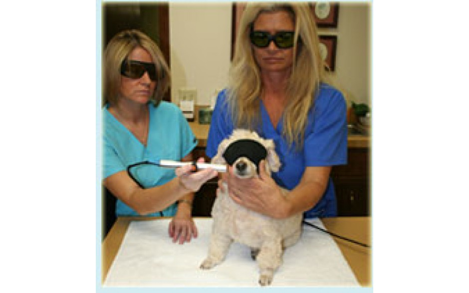 Laser Therapy Principles in the Companion Animal Practice