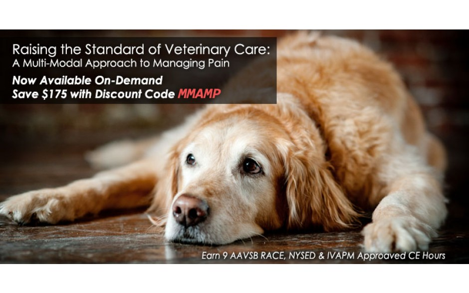 Raising the Standard of Veterinary Care:  A Multi-Modal Approach to Managing Pain - ON DEMAND