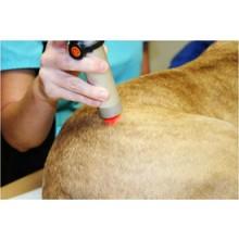 コンパニオンアニマルの診療に おけるレーザー治療の原則